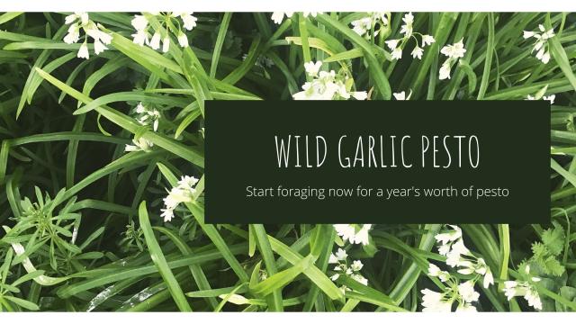 cover photo for wild garlic pesto article
